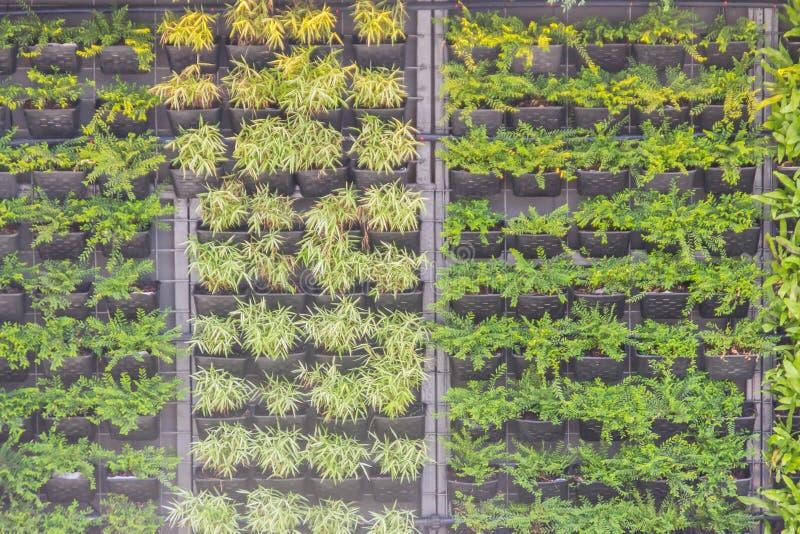 Pared vertical hermosa del jardín con la maceta ornamental en estilo vertical Jardín vertical adornado con la pequeña maceta h fotografía de archivo libre de regalías