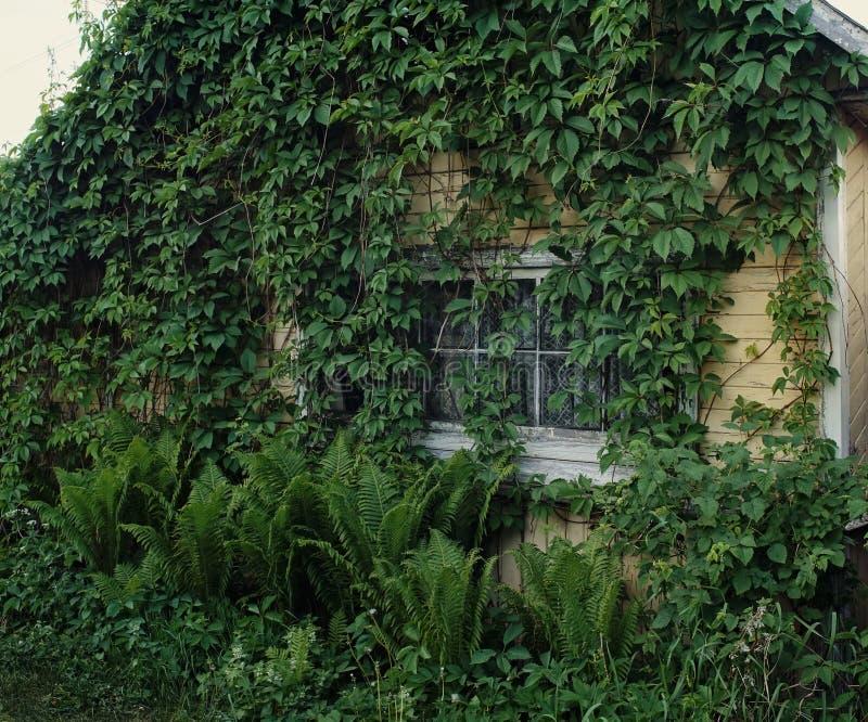 pared vieja de madera del verano del pueblo de las plantas verdes de la ventana de la casa fotografía de archivo libre de regalías