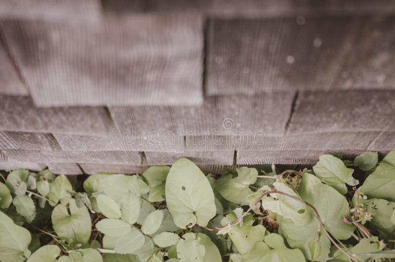 Pared y malas hierbas del vintage imagen de archivo