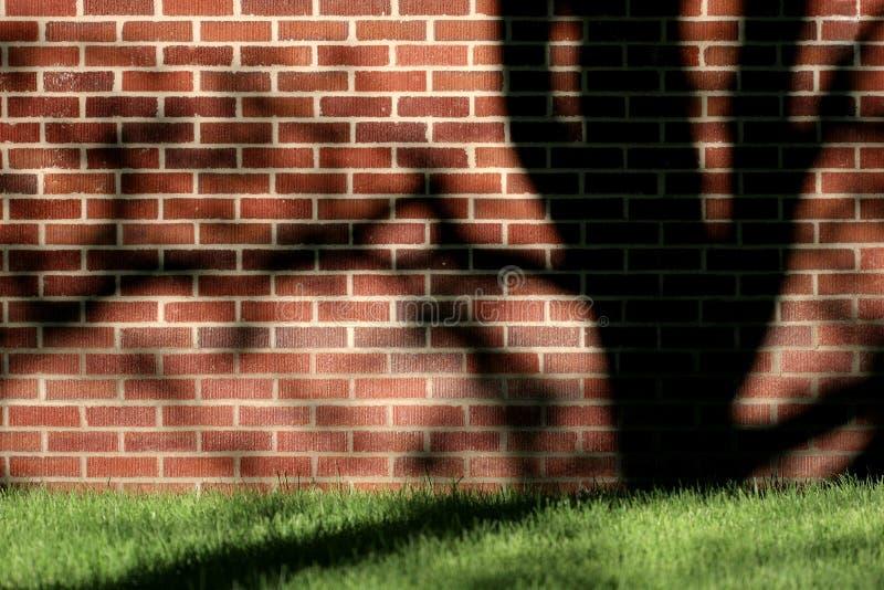 Parede, árvore, E Sombra Fotografia de Stock