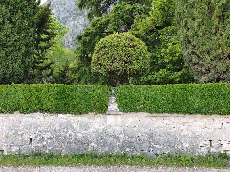 Parede com conversão e árvore fotografia de stock royalty free