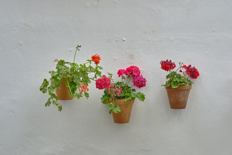Parede com os potenciômetros de flor em Sevilha fotografia de stock