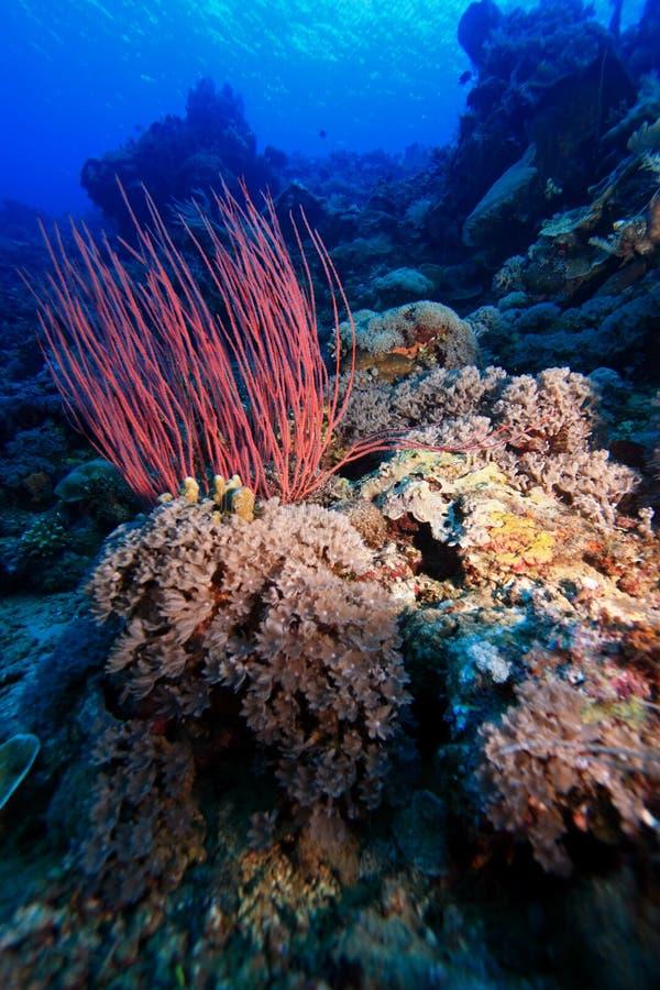 Parede coral fotos de stock royalty free