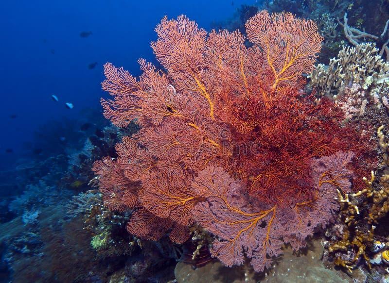 Parede coral fora do console de Bunaken fotos de stock royalty free