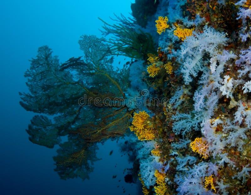 Parede coral macia fotografia de stock royalty free