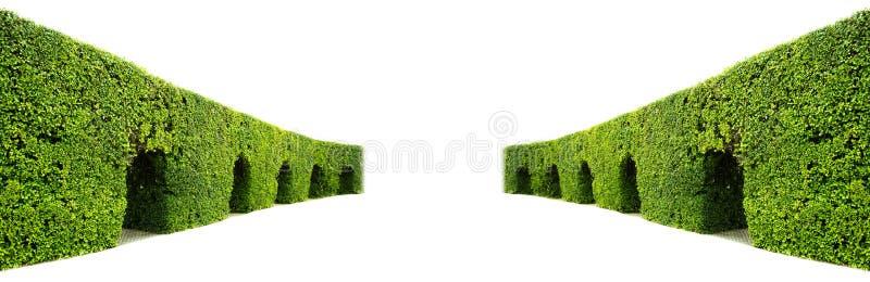 Parede curvada da conversão verde imagens de stock royalty free