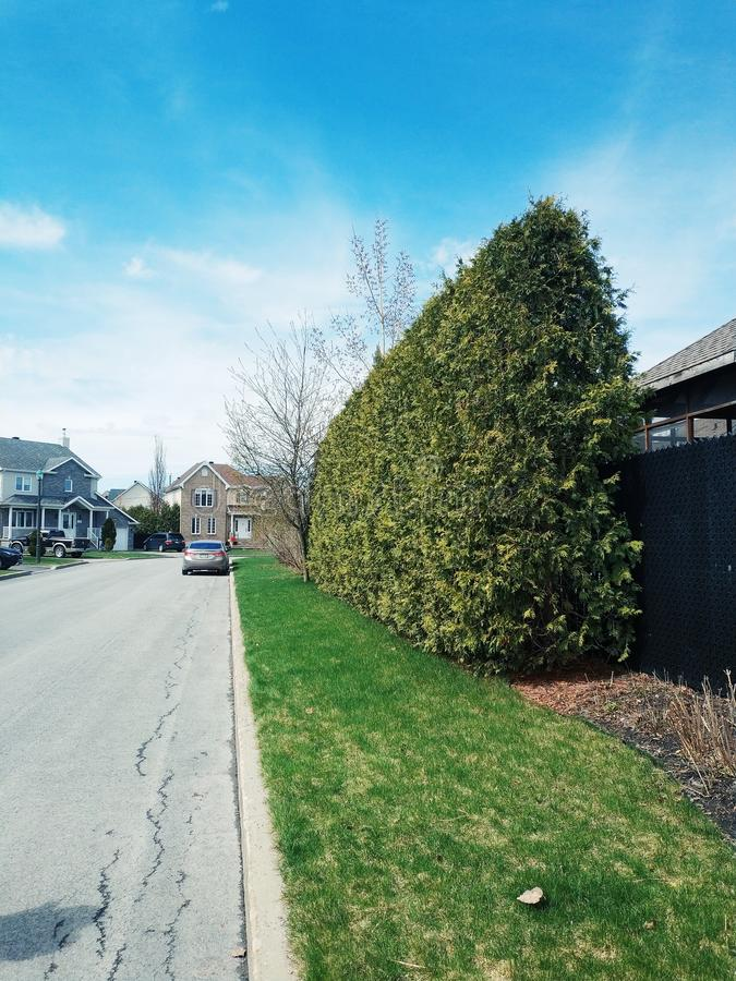 Parede da árvore da casa vizinha imagem de stock