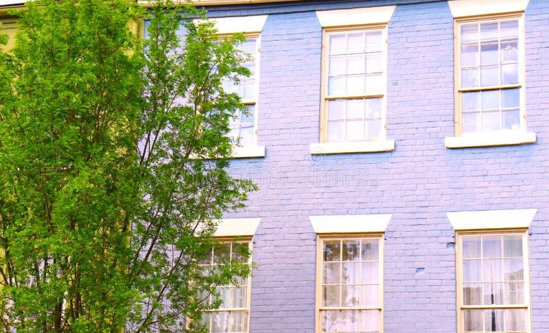 Parede da alfazema do tijolo com Windows branco e árvore verde ao lado foto de stock