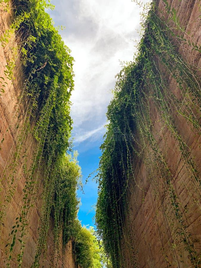 Parede da areia e plantas verdes que crescem em lados e no céu azul imagens de stock