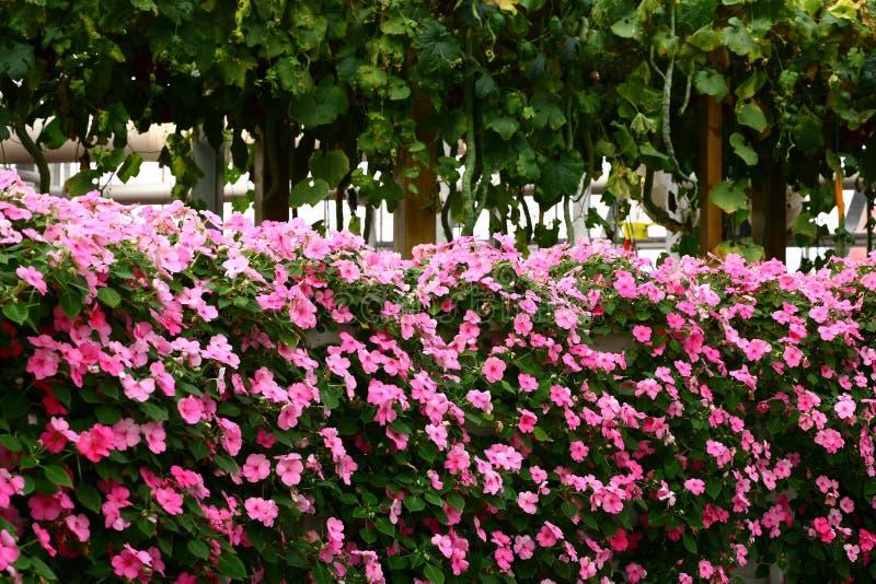 Parede da flor fotografia de stock