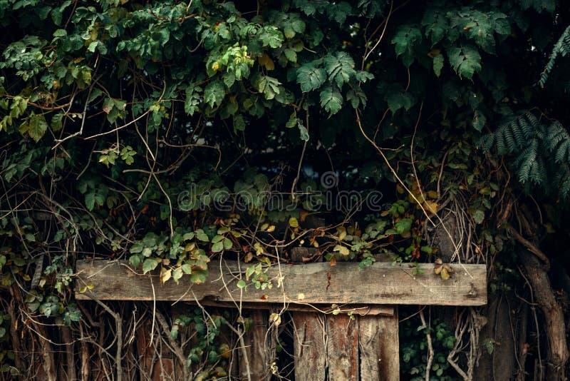 Parede das folhas verdes na perspectiva das colunas de madeira imagens de stock royalty free