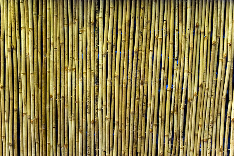 Parede de bambu foto de stock royalty free