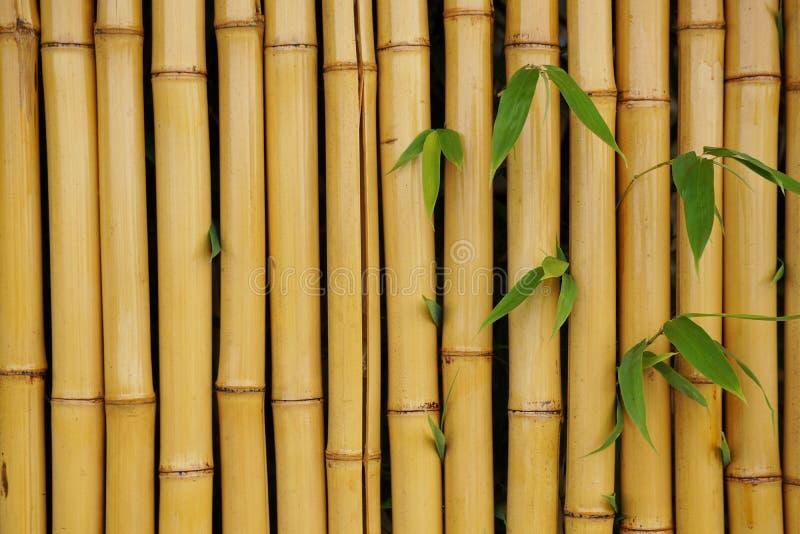 Parede de bambu com fundo das folhas imagens de stock