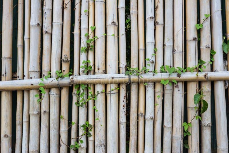 Parede de bambu com videira imagem de stock royalty free