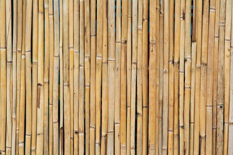 Parede de bambu secada imagem de stock