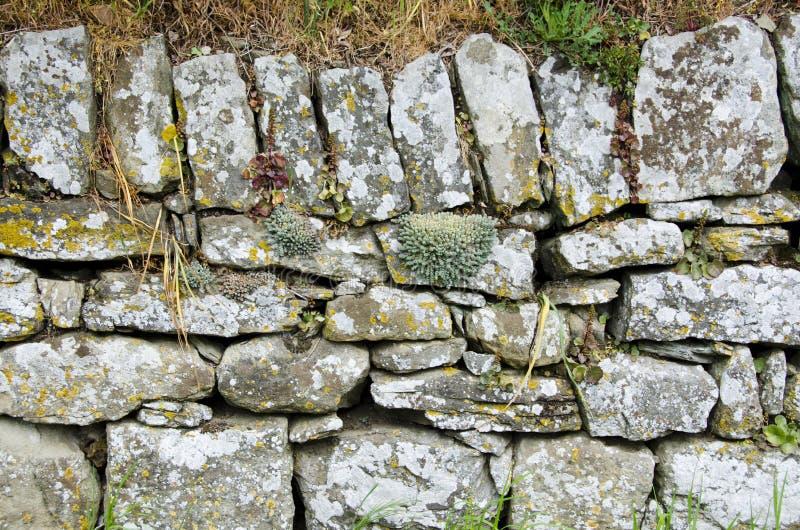 Parede de Etruscan com musgo e plantas carnudas fotografia de stock royalty free