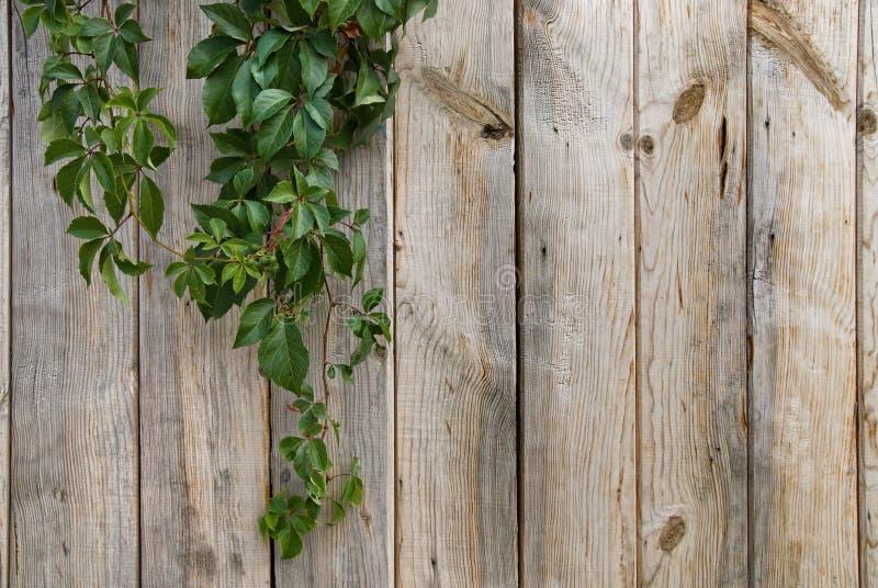 Parede de madeira com folhas verdes fotografia de stock royalty free