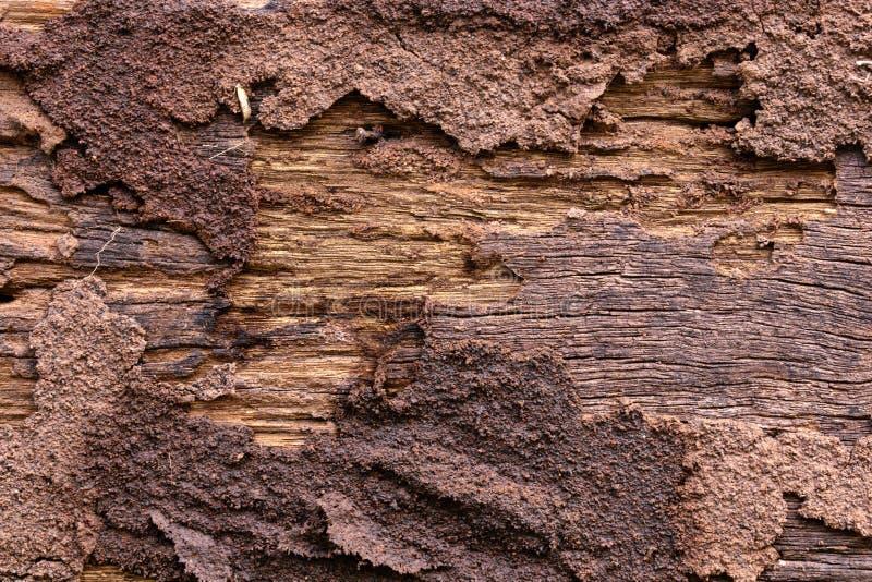 parede de madeira comida térmita velha até desintegrado foto de stock royalty free