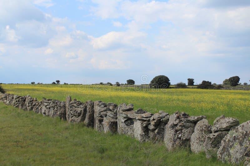 Parede de pedra bonita que separa os campos e os animais fotografia de stock royalty free