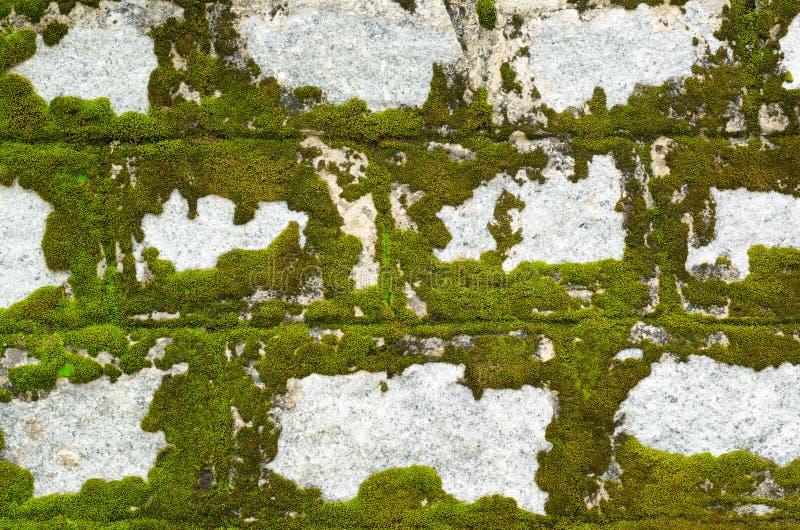 Parede de pedra coberta com o líquene imagens de stock