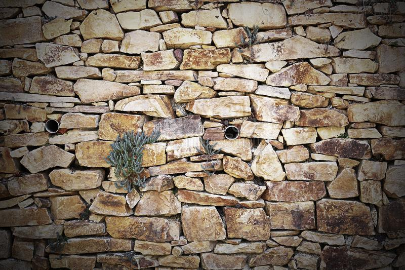 Parede de pedra com vegetação fotos de stock