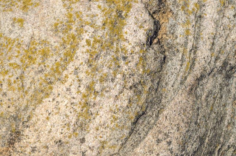 Parede de pedra do fundo com textura crustose do líquene fotos de stock