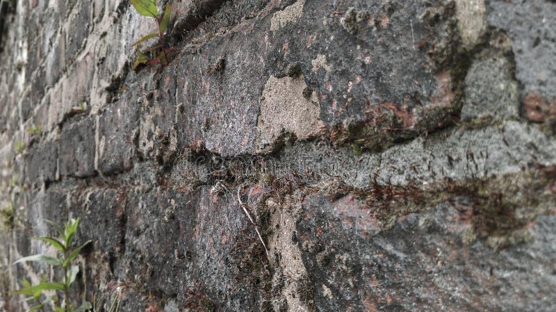 Parede de tijolo imagem de stock