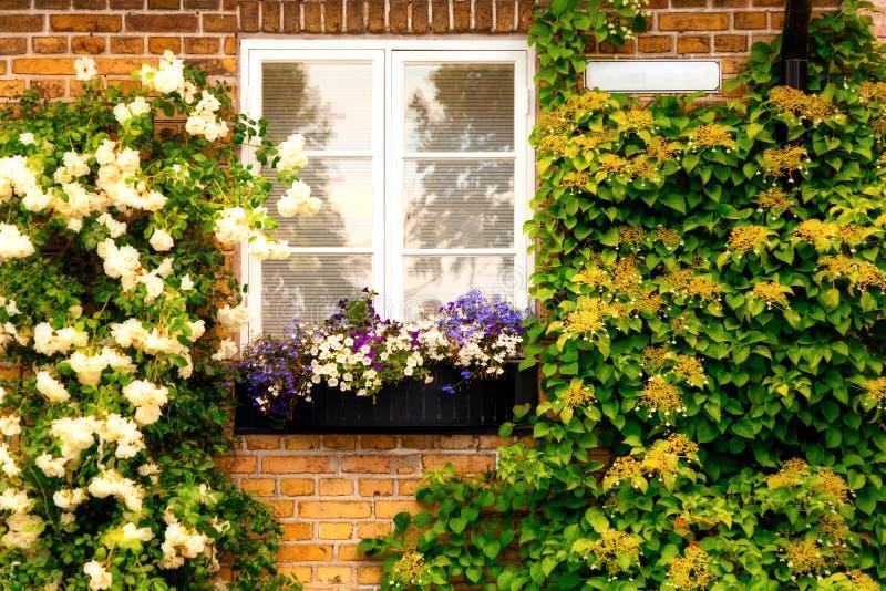 Parede de tijolo com janelas e caixas da flor com as plantas de florescência no Raa sueco pequeno da cidade imagens de stock