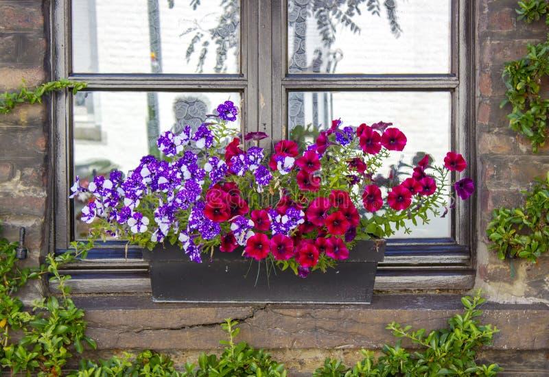 Parede de tijolo com janelas e caixas da flor com plantas de florescência fotografia de stock royalty free