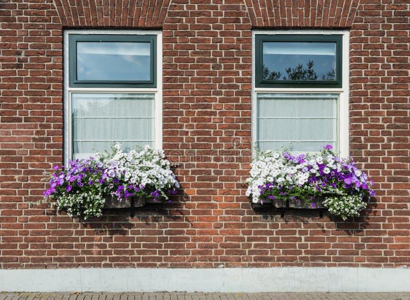 Parede de tijolo da alvenaria com janelas e caixas da flor com florescência imagem de stock