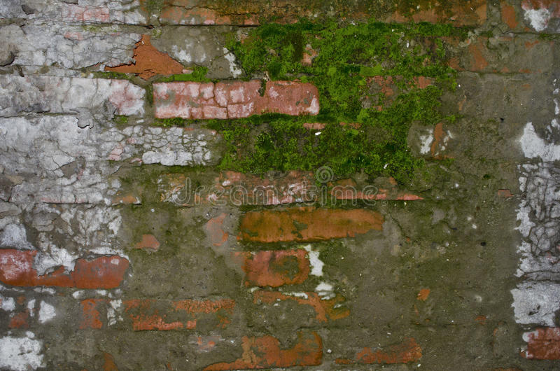 Parede de tijolo velha com musgo fotografia de stock royalty free