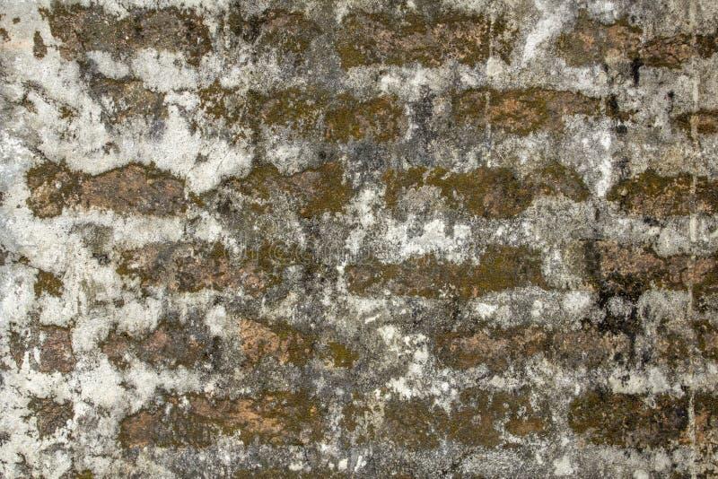 Parede de tijolo vermelho velha com camadas grossas de cimento branco claro, de manchas da sujeira, de molde e de musgo verde Tex imagens de stock