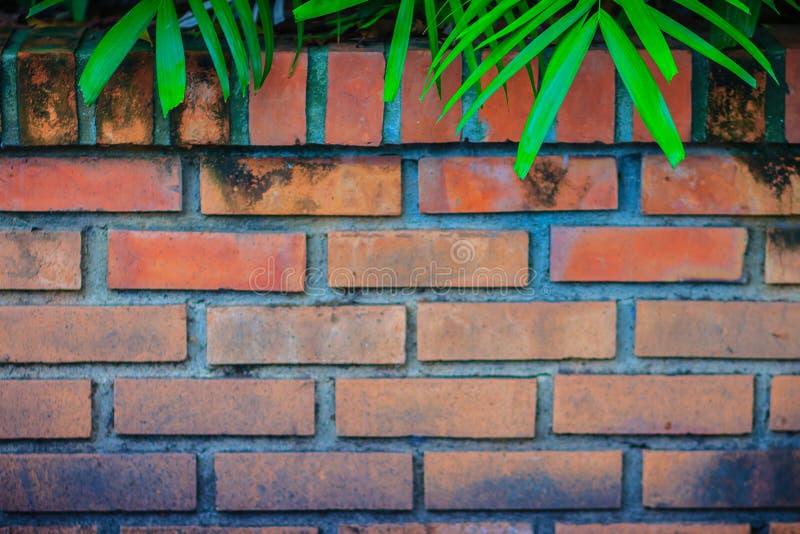 A parede de tijolo vermelho velha com verde natural sae do quadro Palma verde l imagens de stock royalty free