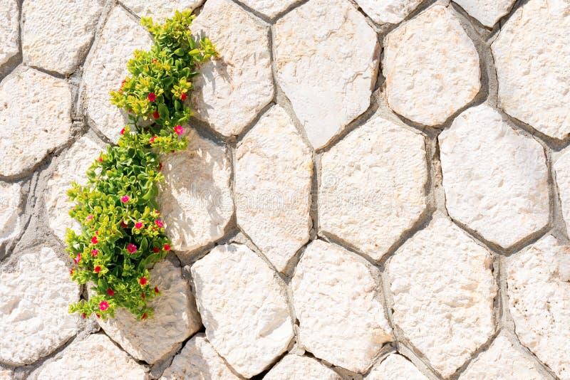 Parede de tijolos com planta verde jovem com flores minúsculas vermelhas que crescem sobre os raios solares foto de stock royalty free