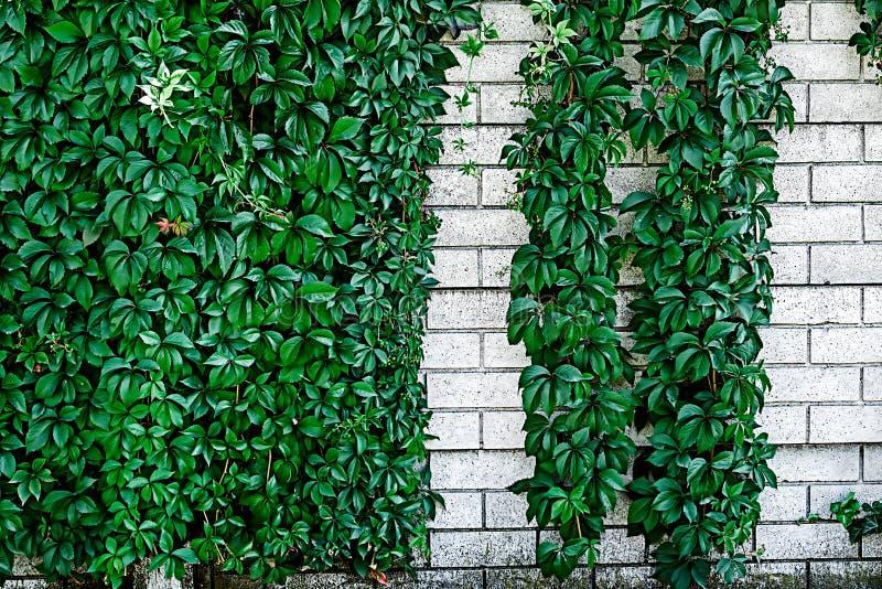 Parede decorativa 11 imagens de stock