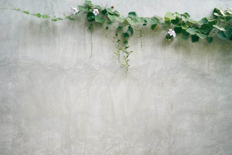 A parede do almofariz Há árvores vistas em torno das paredes e da construção Jardinagem asiática do estilo imagens de stock
