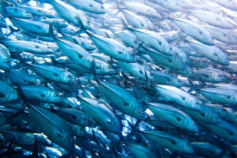Parede do atum fotografia de stock