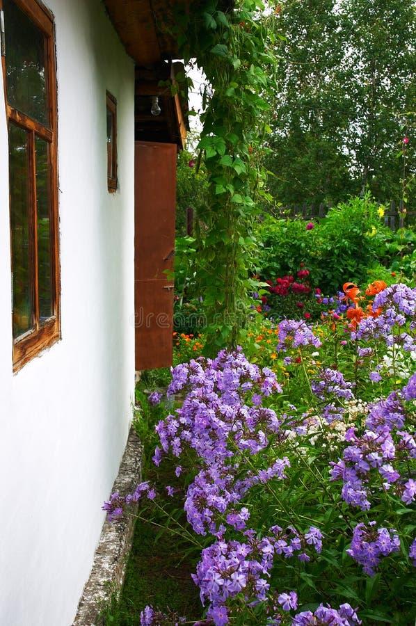 Download Parede e lilac brancos imagem de stock. Imagem de suburbs - 528235