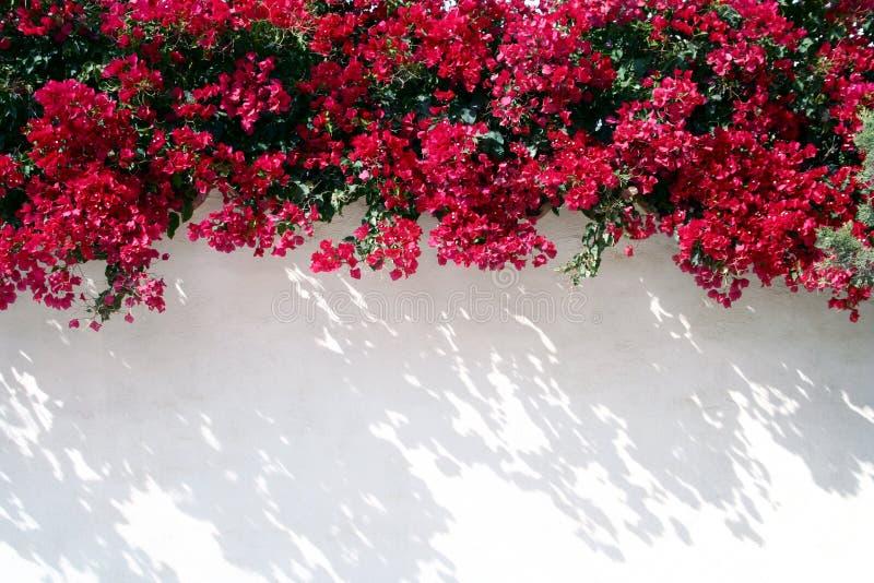 Parede espanhola com flores imagens de stock royalty free