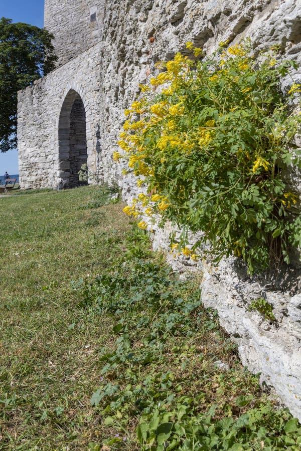 Parede medieval do castelo em Visby, Gotland, Suécia imagem de stock royalty free