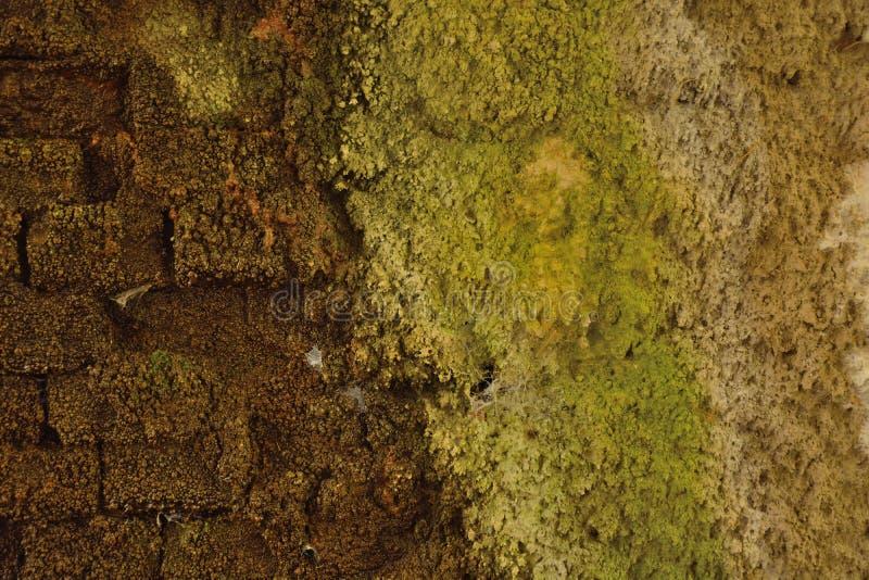 Parede mouldy molhada do detalhe fotografia de stock