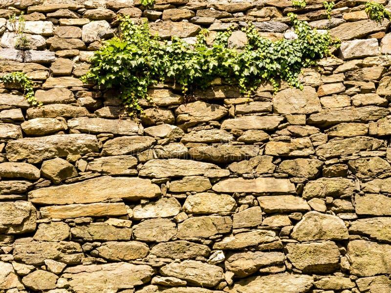 Parede velha da fortaleza no parque de Namsan em Seoul Folhas verdes suculentas da uva na parede de pedra Molde natural do fundo  imagens de stock royalty free