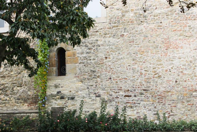 Parede velha no castelo de Praga com árvore foto de stock