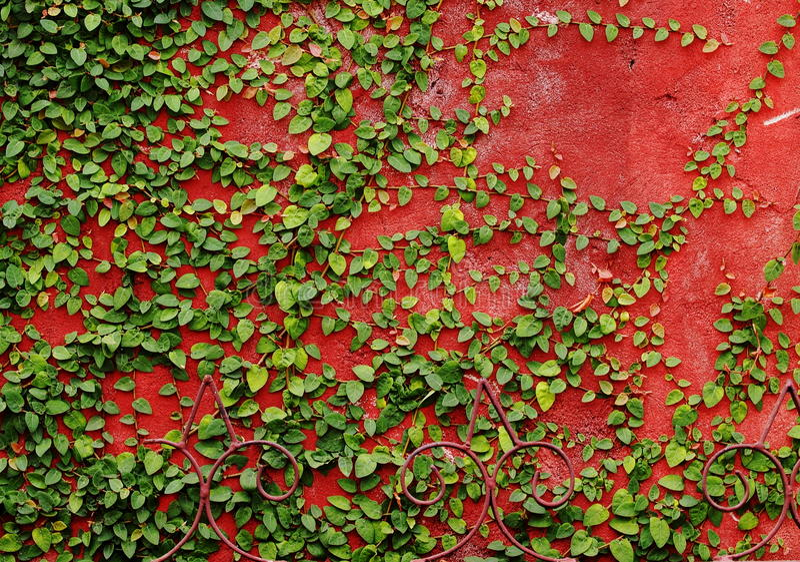Parede verde fotografia de stock