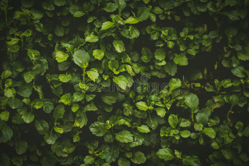 Parede verde fotografia de stock royalty free