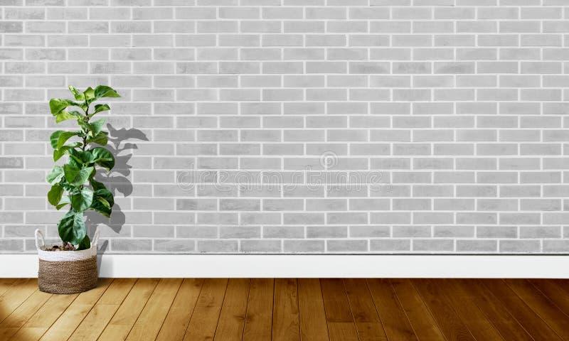 Paredes de tijolo cinzentas brancas com assoalhos de madeira e árvore com luz natural para a fotografia do fundo imagem de stock royalty free