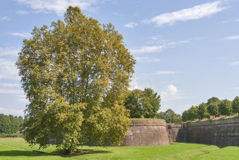 Paredes medievais da cidade de Lucca, Itália fotos de stock royalty free