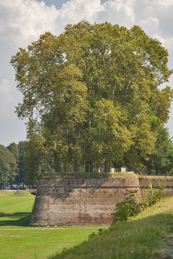 Paredes medievales de la ciudad de Lucca, Italia foto de archivo