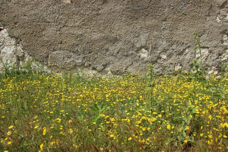 Paredes velhas e flores selvagens de florescência fotografia de stock