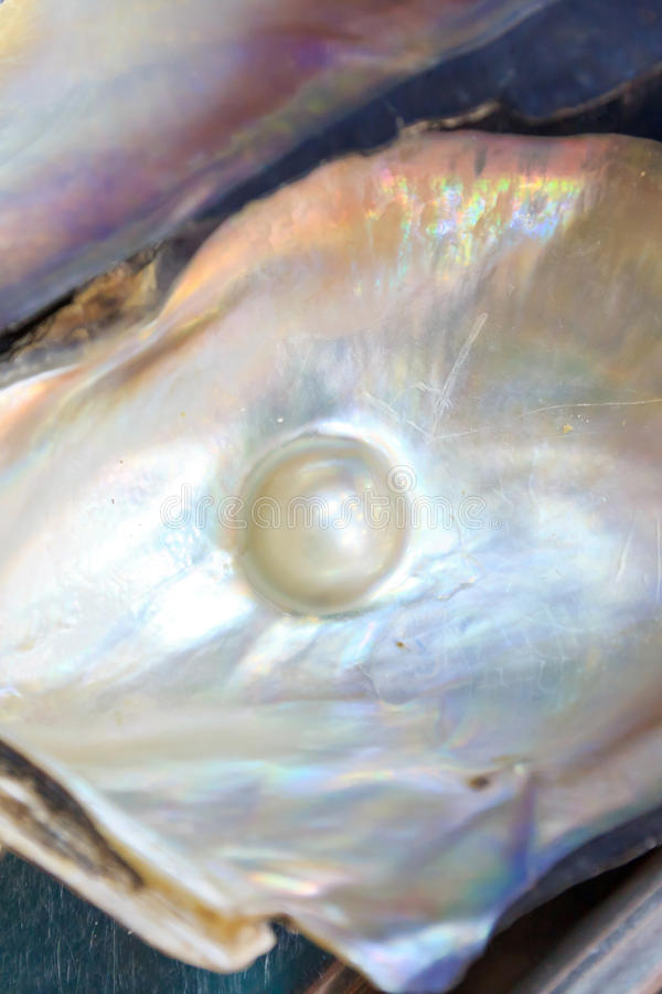 Parel op shell royalty-vrije stock fotografie